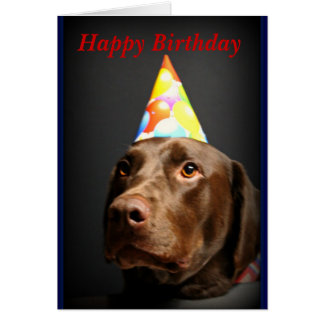 Happy Birthday card~Chocolate Lab Card