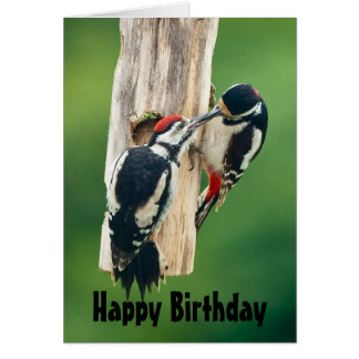 Happy Birthday card great spotted woodpecker