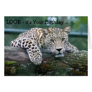 Happy Birthday Card: Leopard looking over a branch Card
