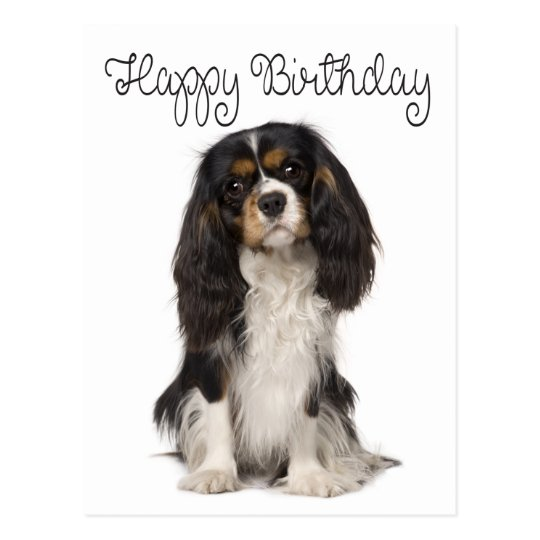Happy Birthday Cavalier King Charles Spaniel Postcard