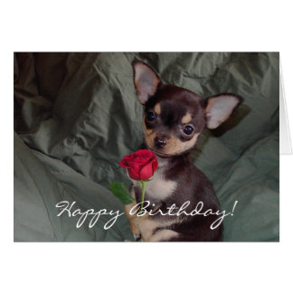 Happy Birthday Chihuahua Puppy Card