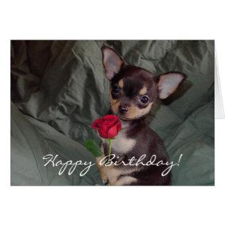 Happy Birthday Chihuahua Puppy Card