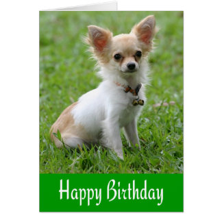 Happy Birthday Chihuahua Puppy Green Greeting Card
