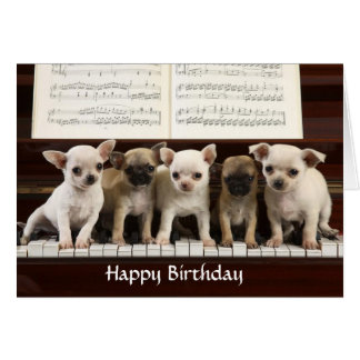 Happy Birthday Chihuahua Puppy Greeting Card
