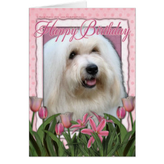 Happy Birthday - Coton de Tulear Card