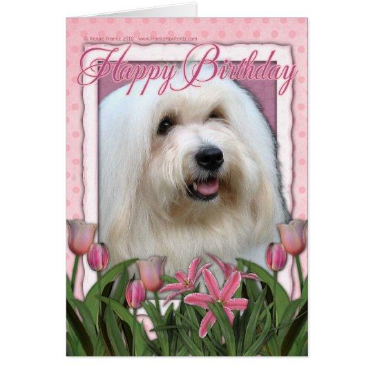 Happy Birthday - Coton de Tulear Card
