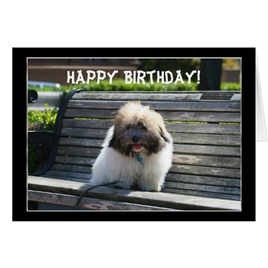Happy Birthday Coton de Tulear Puppy greeting card