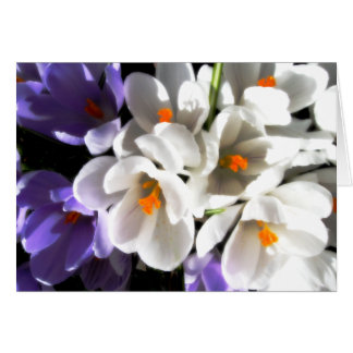 Happy Birthday-Crocus Card