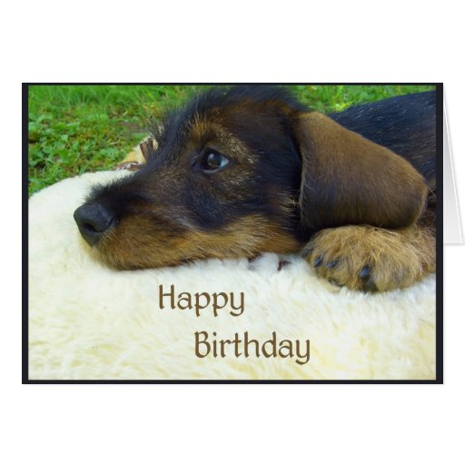 Happy Birthday, cute Dachshund puppy Greeting Cards