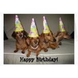 Happy Birthday Dachshund Greeting Cards