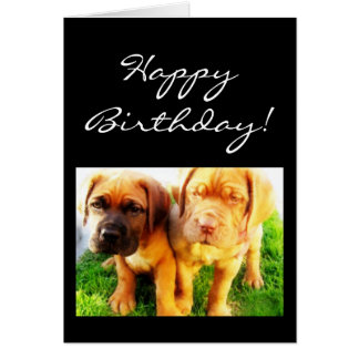 Happy Birthday Dogue de Bordeaux greeting card
