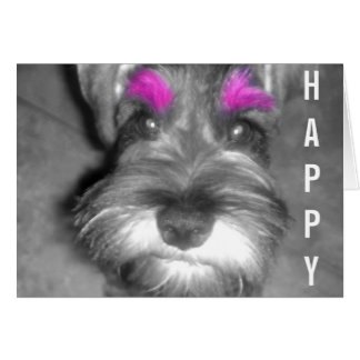 Happy Birthday Dude Miniature Schnauzer Puppy Greeting Card