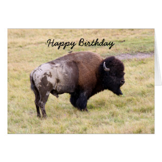 Happy Birthday, Dusty Bison Bull Humor Card