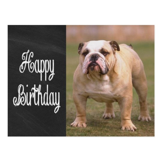 Happy Birthday English Bulldog Chalkboard Postcard