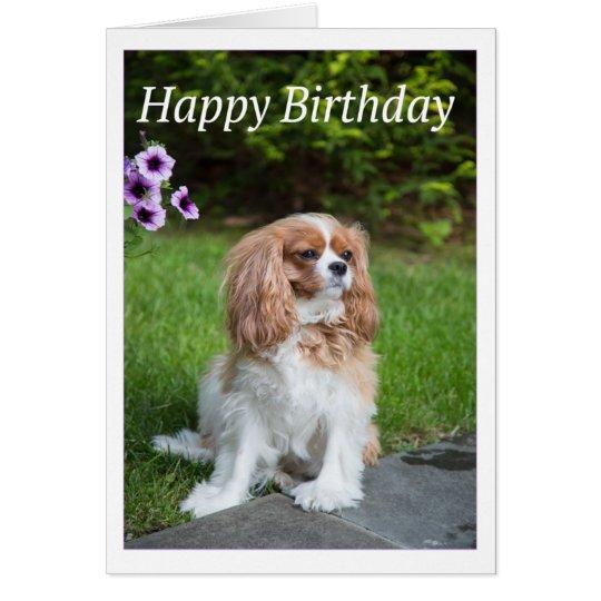 Happy Birthday Flowers Cavalier King Spaniel Card