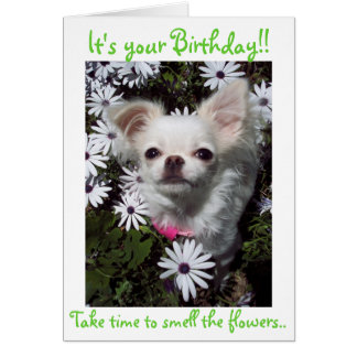 Happy Birthday for Dogs Note Card