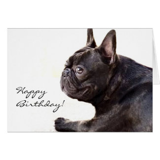 Happy Birthday French Bulldog card