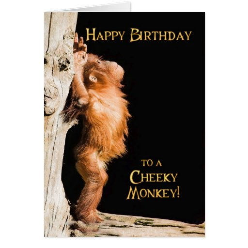 Happy birthday from a baby orang utan cards