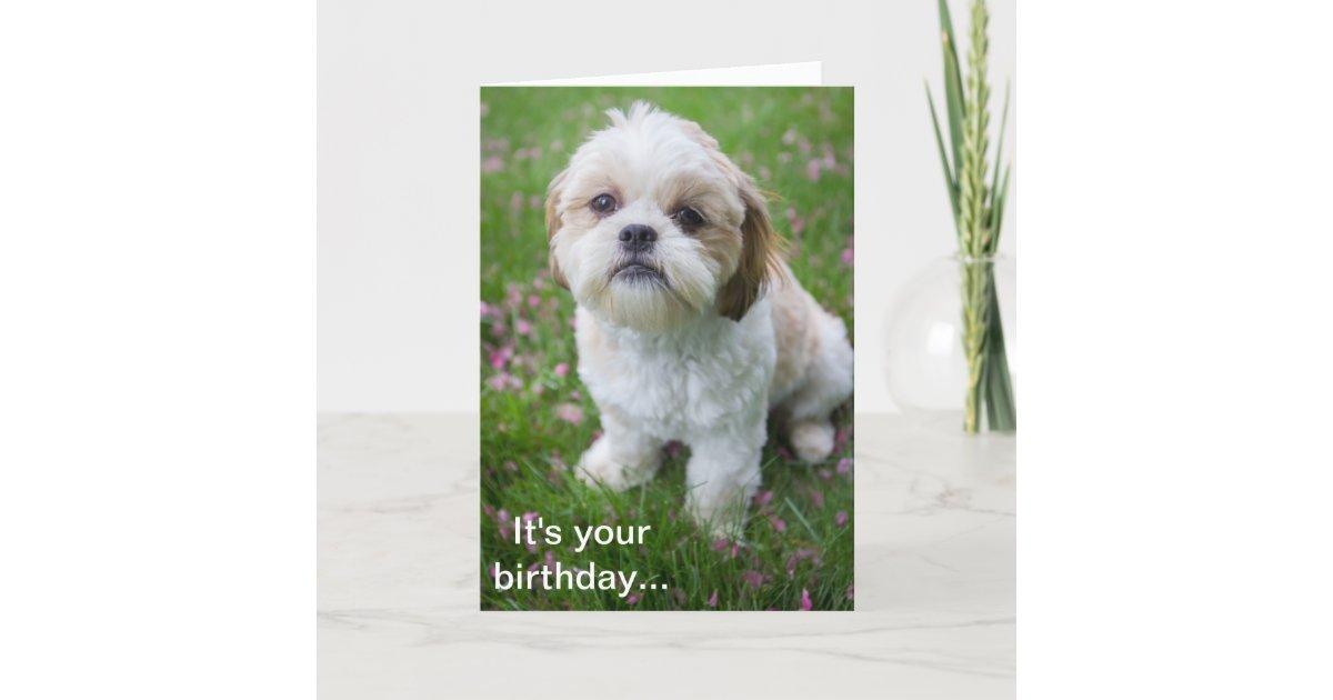 Happy Birthday From Edie The Shih Tzu Puppy Card Zazzle