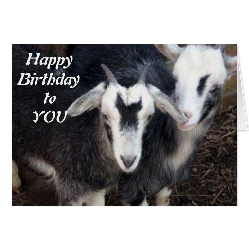 Happy birthday goat - photo#4