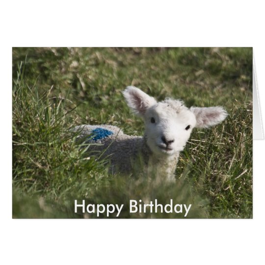 Happy birthday from me to ewe card