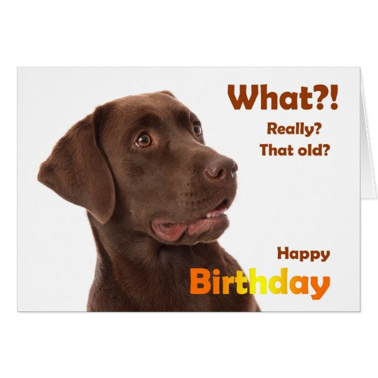 Happy Birthday fun card with Labrador dog