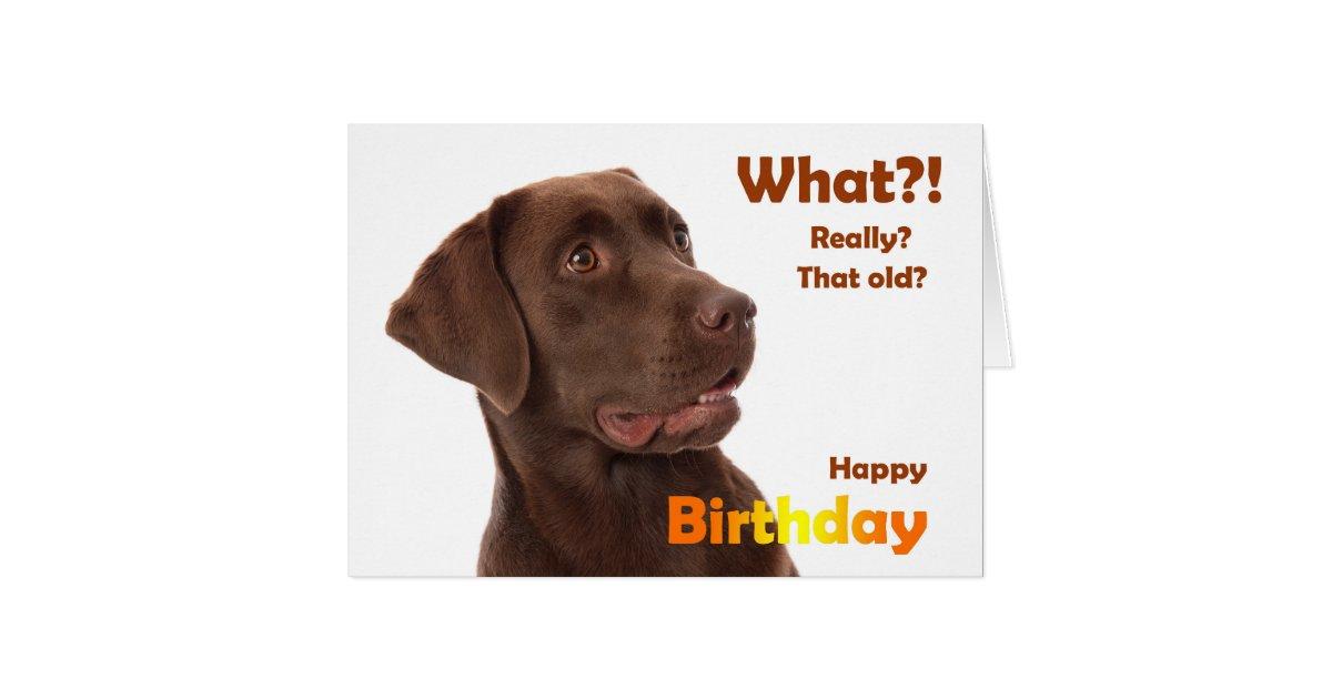 Happy birthday fun card with labrador dog zazzle bookmarktalkfo Image collections