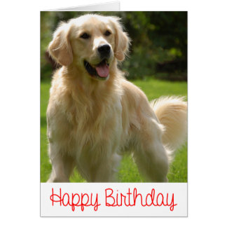Happy Birthday Golden Retriever Puppy Card