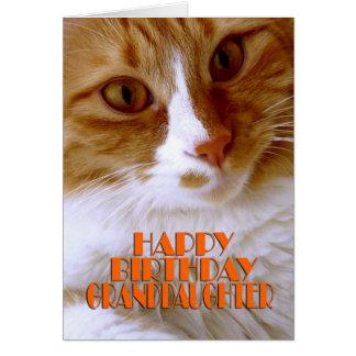 Happy Birthday Granddaughter - Sweet Cat Greeting Card