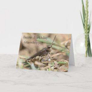 Decor PillowCase Macro Grasshopper Legs