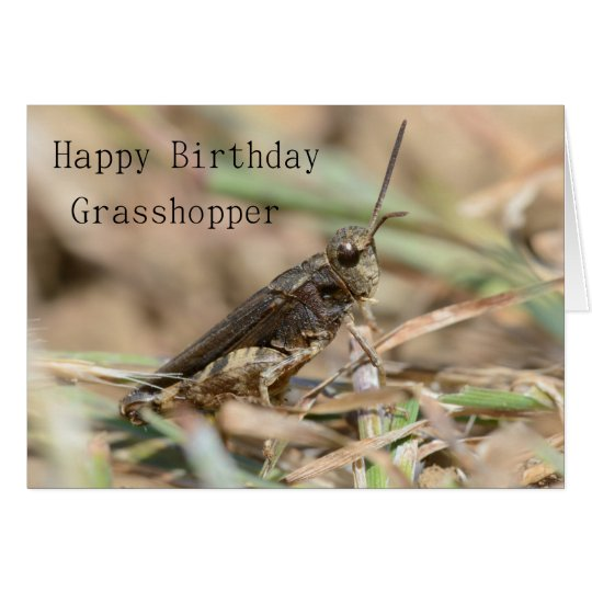 Happy Birthday Grasshopper Greeting Card