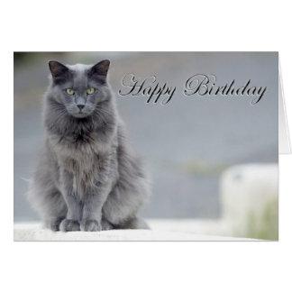 Happy Birthday Grey Cat Greeting Card
