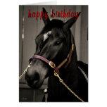 Happy Birthday Horse Birthday card horse lovers