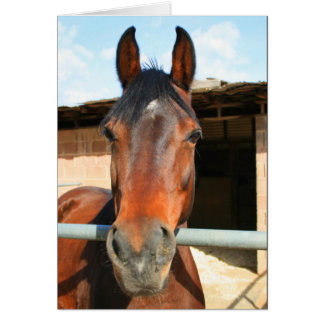 Happy Birthday horse greeting card