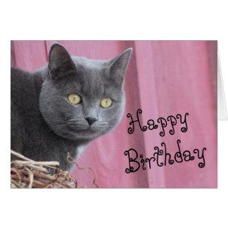 Happy Birthday Kitty Cat Card