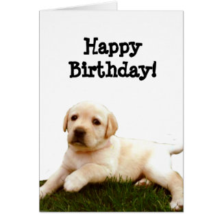 Happy Birthday Labrador puppy greeting card