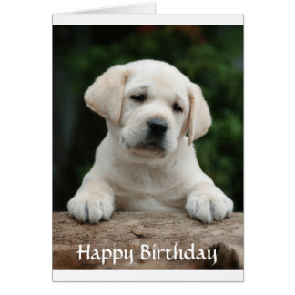 Happy Birthday Labrador Retriever Puppy Card