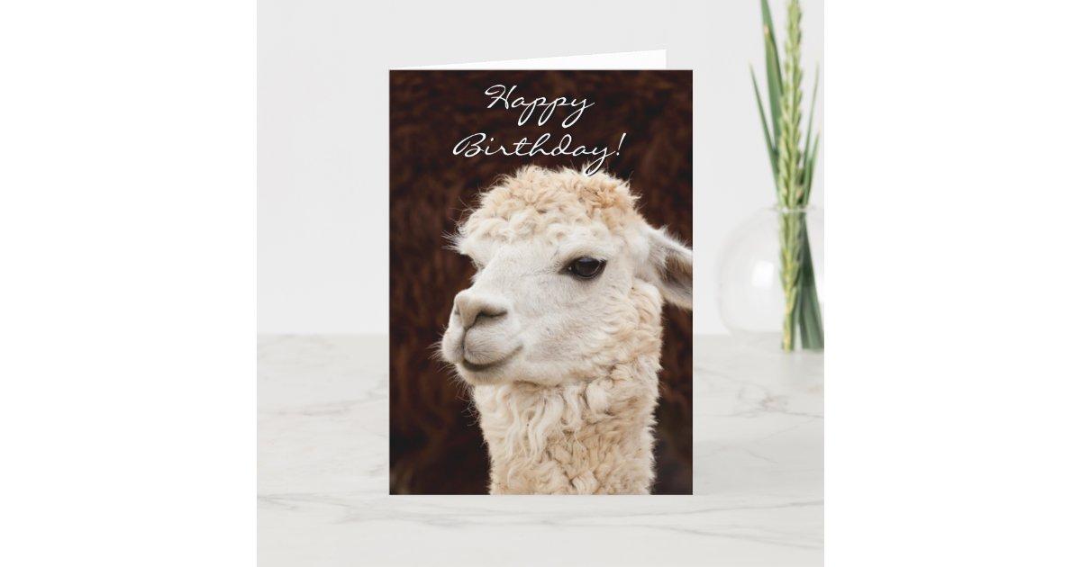 Happy Birthday Llama Greeting Card