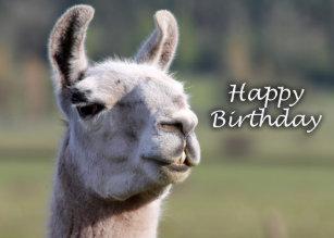 Llama Birthday Cards Zazzle Uk