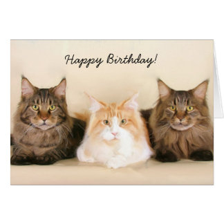 Happy Birthday Maine Coon Cats greeting card