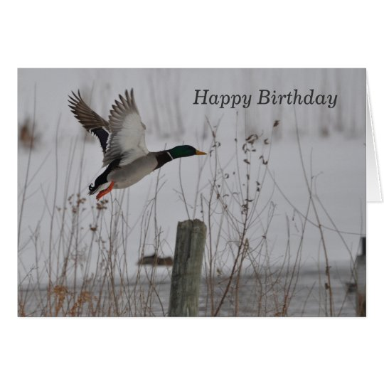 Happy Birthday Mallard Duck Card