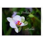 Happy Birthday Mother Phalaenopsis Orchid Card