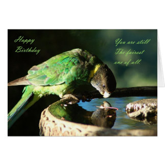Happy Birthday - parrot Cards