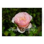 Happy Birthday Pink English Rose