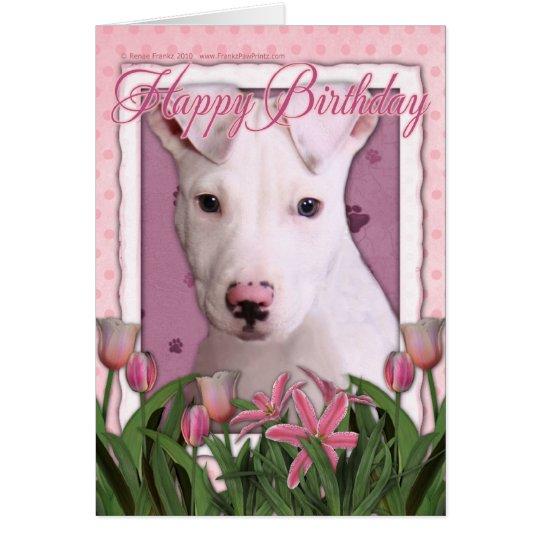Happy Birthday - Pitbull - Petey Card