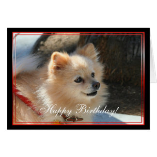Happy Birthday Pomeranian greeting card