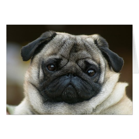 Happy Birthday Pug Puppy Dog Greeting Card -