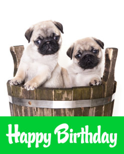 Happy Birthday Pug Puppy Dogs Greeting Card Verse