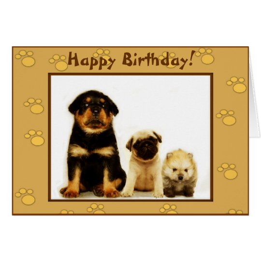 Happy Birthday puppies greeting card
