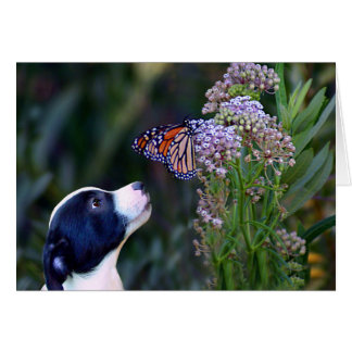 Happy Birthday Puppy and Butterfly Card